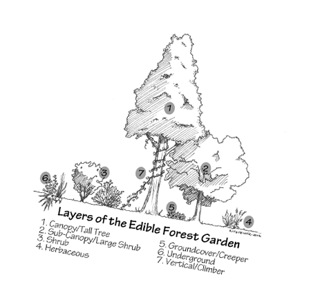 Forest Garden Illustration