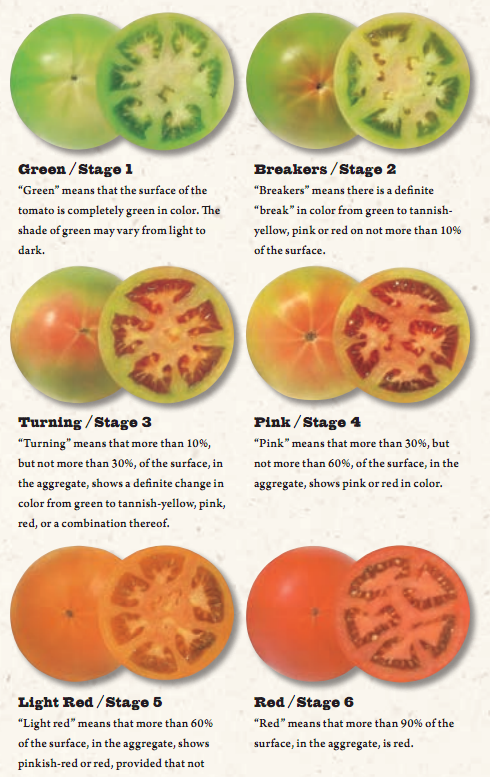 Tomato_Ripening_Stages