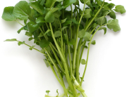 Watercress05