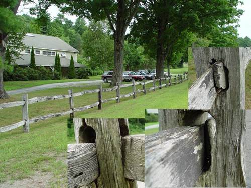 Black Locust is famous as a very long-lasting post wood.