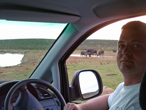 That's me driving through South Africa. Note the Cape Buffalo at the watering hole... mobbing together.