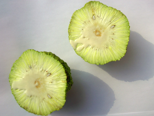 The fruit contains edible, but not very good, seeds.