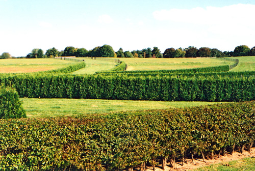 Osage Orange was a traditional, and very effective, living hedge for livestock.