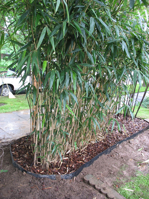Rhizome barriers are one way to keep Bamboo rhizome's within bounds.