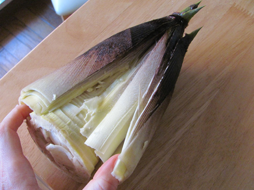 Bamboo shoot being split and hard outer layers peeling off.