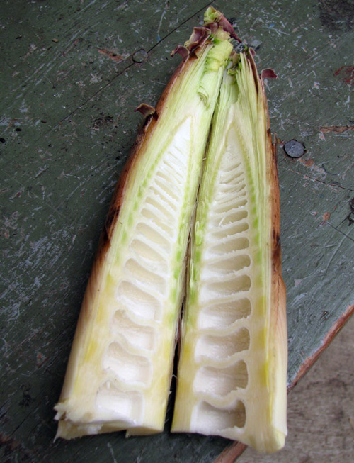 Another split Bamboo shoot.