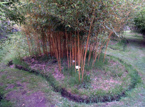 Rhizome pruning once or twice a year is another way to keep Bamboo within bounds.