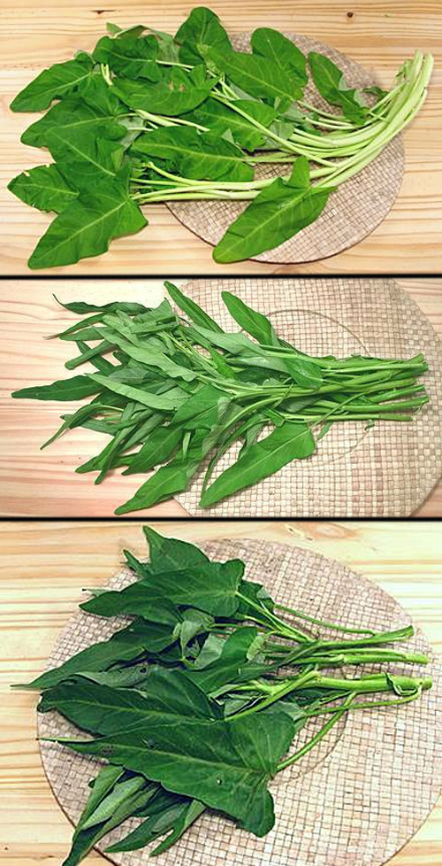 Top (white-stemmed, broad-leaf), Middle (green-stemmed, narrow/long leaf), Bottom (green-stemmed, broad leaf)