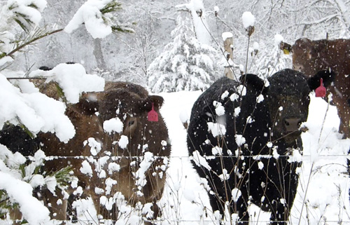 The current method for caring for livestock during the Winter takes a lot of energy and time.