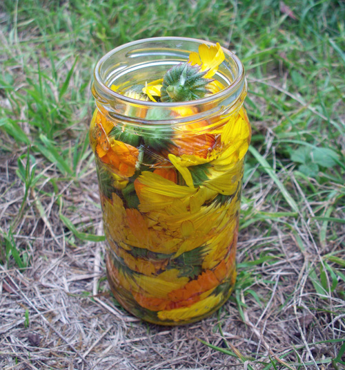 Making Calendula Oil... quite easy to do.
