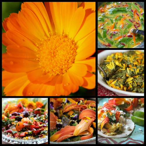 Click on the photo to see some of the best photos of Calendula I have ever seen.