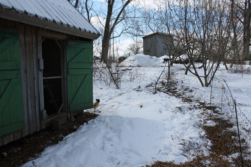A snowed-in chicken coop.