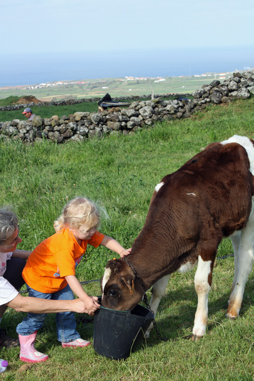 My oldest daughter bringing milk to a calf. Terceira Island, Azores