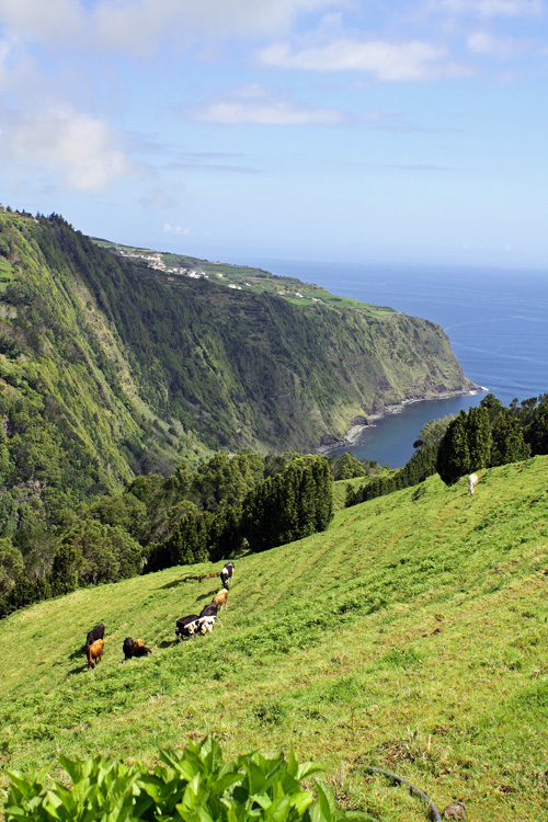 Yet another breathtaking pasture/overlook. São Miguel Island, Azores