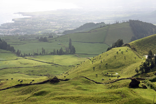 The hilly pastures of the Azores. São Miguel Island, Azores
