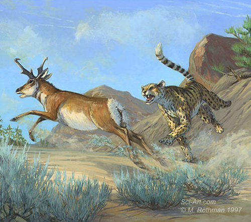 Artist's rendition of the American Cheetah.
