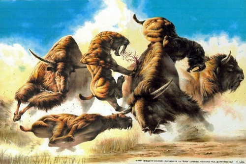 Artist's rendition of Bison being attacked by Smilodon.