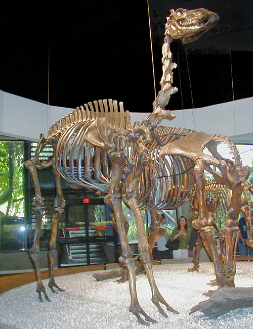 Camel skeleton.