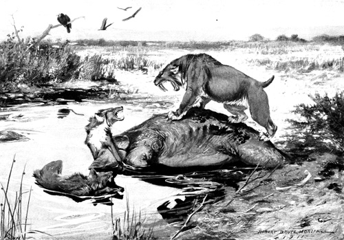 Artist's rendition of a pack of Dire Wolves fighting with a Similidon (Sabre-toothed Cat).
