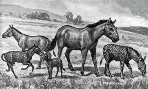 Artist's rendition of various extinct horse species.