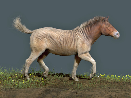 Artist's rendition of a North American Horse.