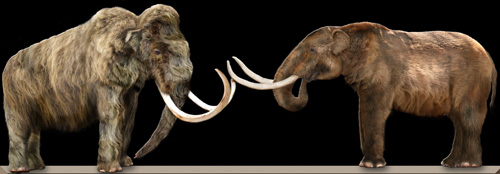 Comparing the Wooly Mammoth (left) with the Mastodon (right).