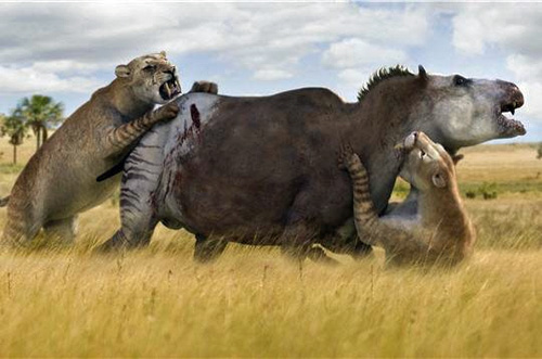 Artist's rendition of a Smilodon attack.