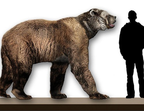 Size comparison of the Short-Faced Bear.