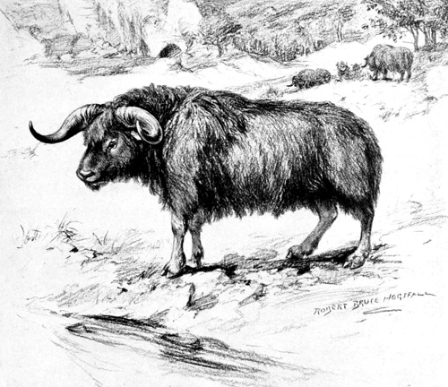 Artist's rendition of the Shrub-Ox.