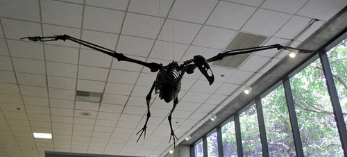 Teratorn skeleton.