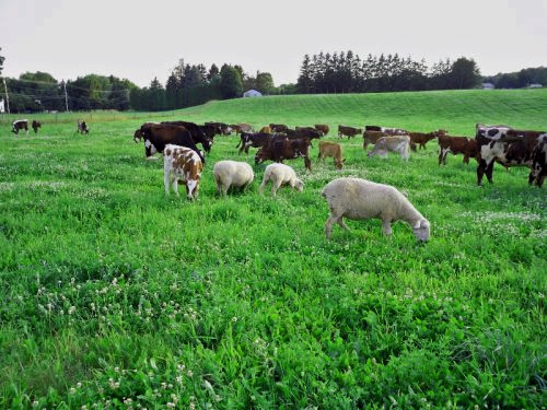 Multispecies Grazing can consist one just two species, but can also include many more.