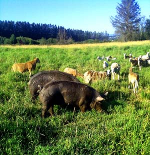 Multispecies Grazing: An Introduction