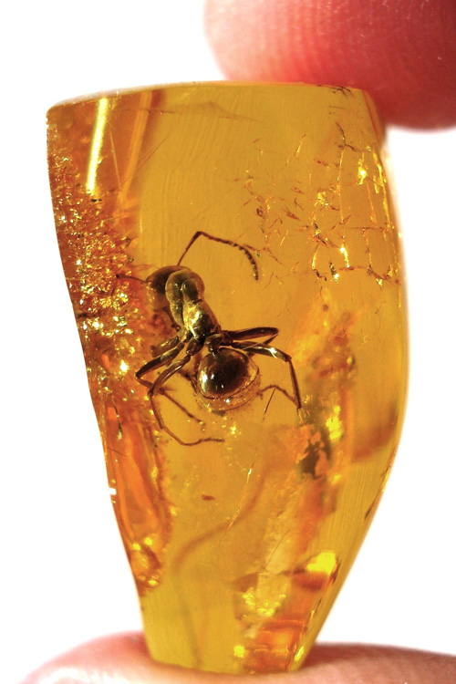 Amber with a trapped insect.