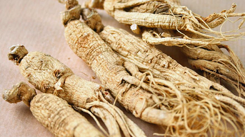 Permaculture Plants: Ginseng
