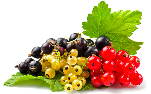There are a wide variety of currants.