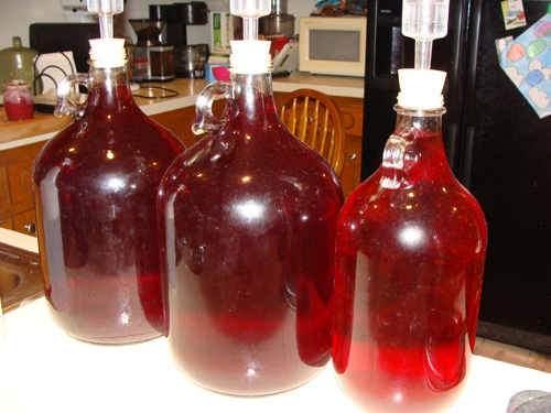 Although many prefer to make Muscadine wine from the fruits!