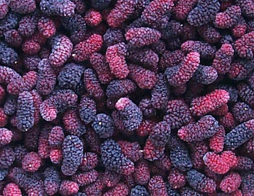 Mulberries can be frozen just like raspberries or blackberries!