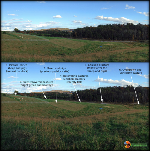 Example of how we are using Holistic Management to regenerate the Bauernhof!