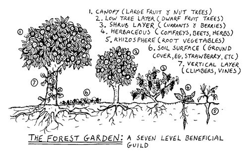 Robert Hart's initial 7 layers of a Forest Garden.