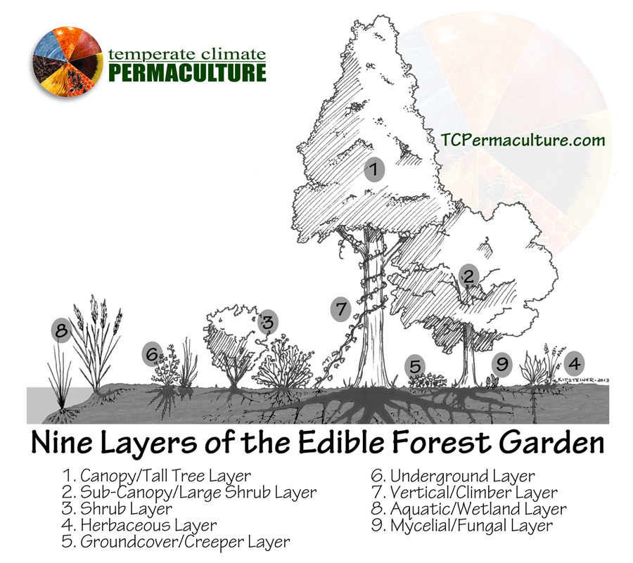 My 9 Layers of an Edible Forest Garden.