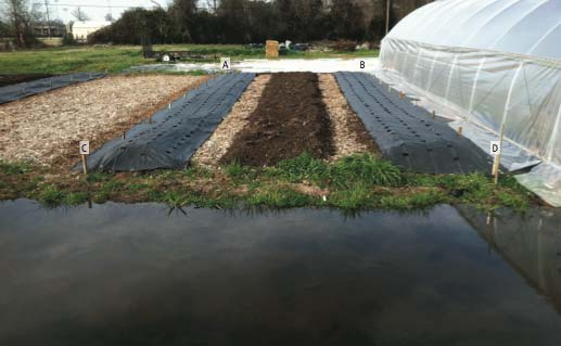 Shawn's construction of a new greenhouse with a reflecting pond in the foreground.