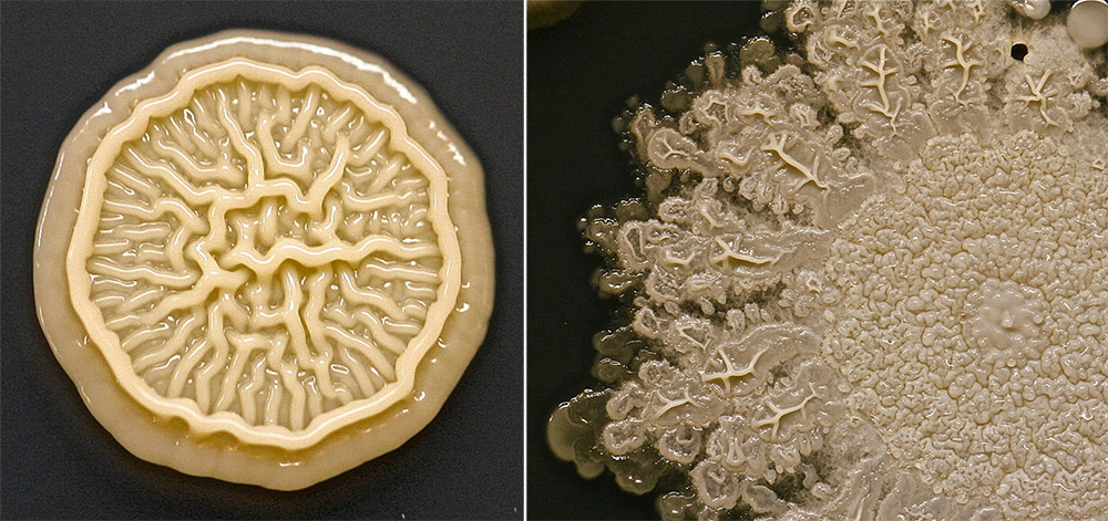 Close-up of some of the bacteria colonies.