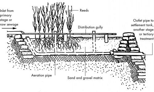 Reeds09