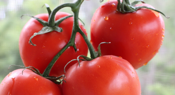 Where I Can Get Natural Real Tomatoes Seeds