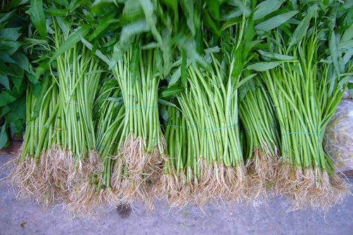 Water Spinach is a common vegetable in Asian cuisine.